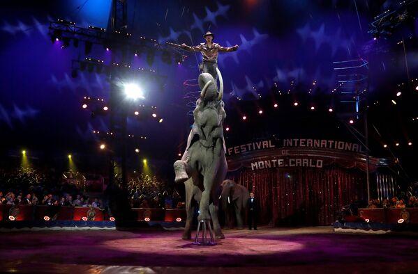 41 Międzynarodowy Festiwal Cyrkowy w Monte Carlo - Sputnik Polska