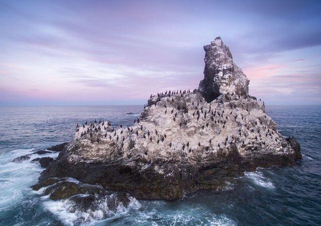 Skalista wyspa na Oceanie Spokojnym przyciąga kormorany i inne nadmorskie ptaki