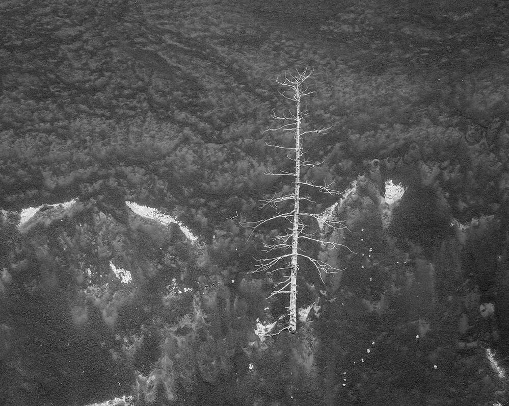 Samotne drzewo, które wyrosło na urwistym zboczu starego krateru