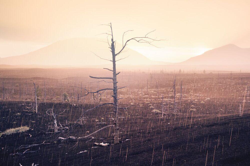 Deszcz nad suchymi drzewami martwego lasu