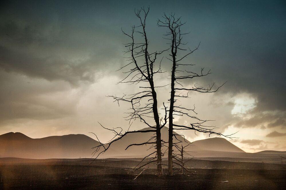 Mglisty zmrok nad doliną martwego lasu