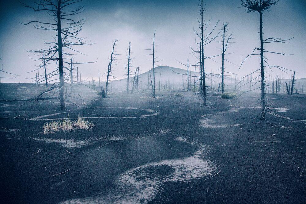 Nocna ulewa w martwym lesie