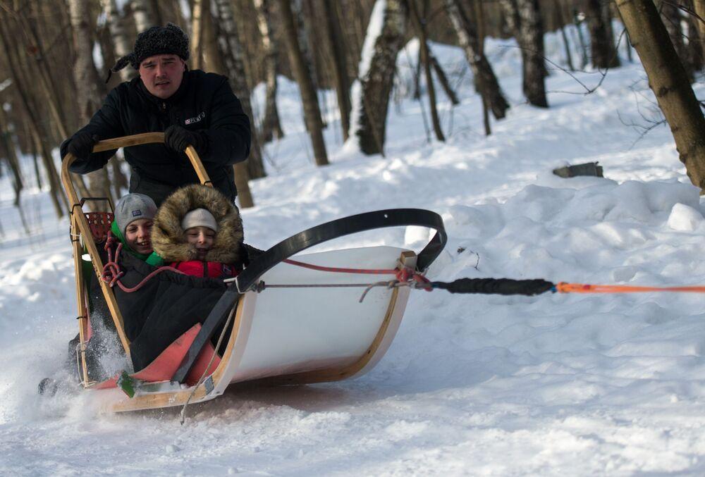 Dzieci jeżdżą w psim zaprzęgu po parku Sokolniki