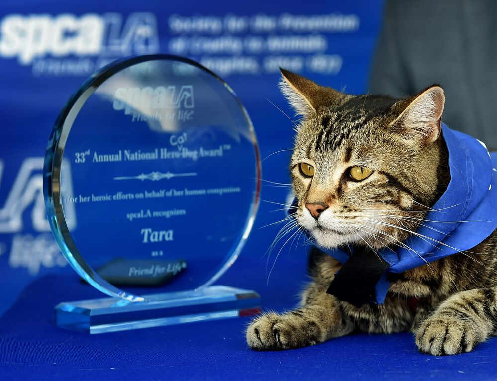 Kotka Tara stała się znana po tym, jak uratowała przed atakiem psa czteroletniego syna właścicieli.