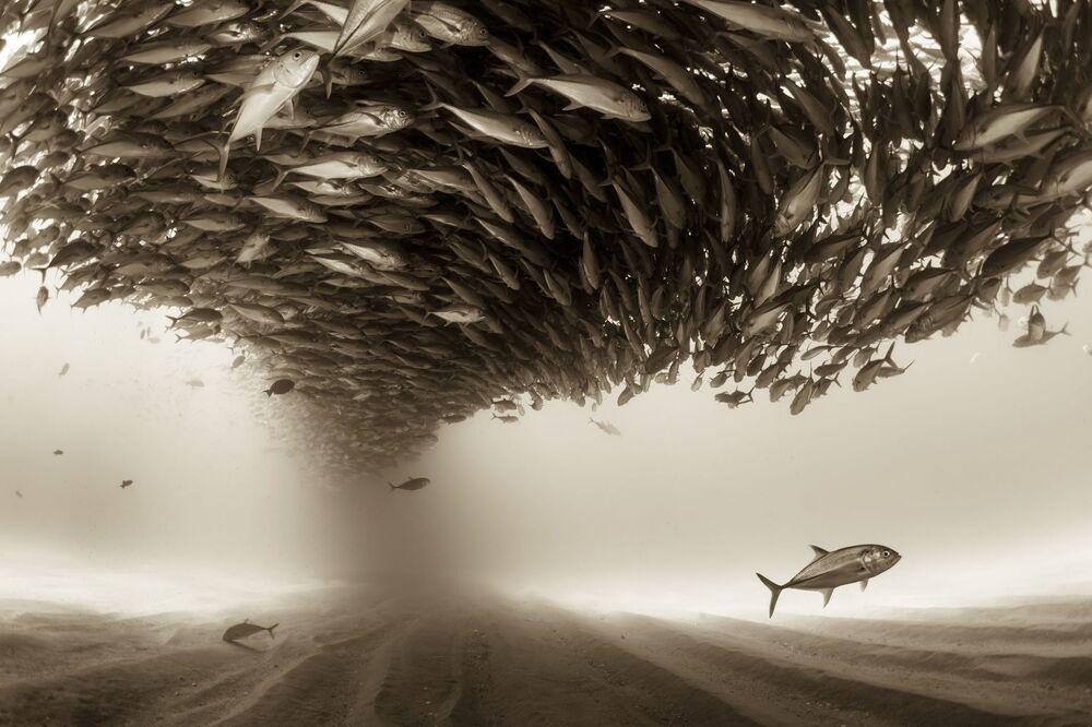 Autor: Christian Vizl (Meksyk). Kategoria profesjonalna: Świat natury.