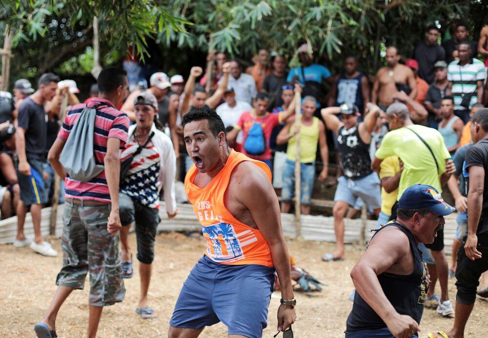 Walki kogutów na Kubie