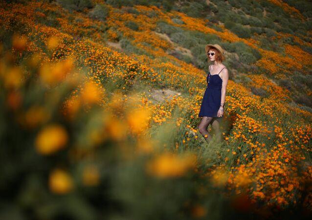 Początek wiosny w Kalifornii