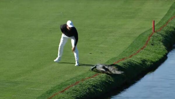 Amerykański golfista podczas turnieju zepchnął aligatora do stawu - Sputnik Polska