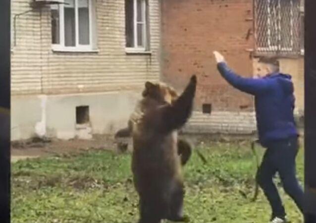 W Taganrogu są poszukiwani świadkowie spaceru z niedźwiedziem