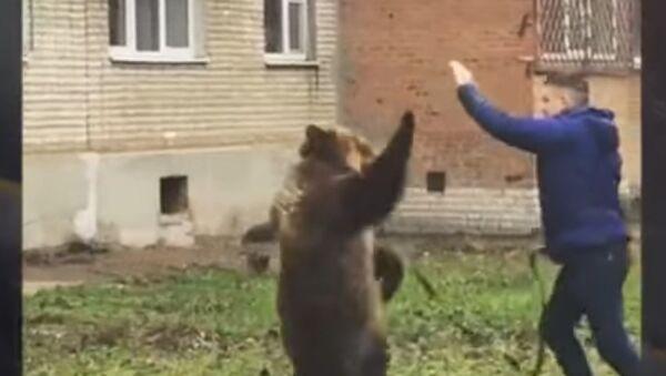 W Taganrogu są poszukiwani świadkowie spaceru z niedźwiedziem - Sputnik Polska