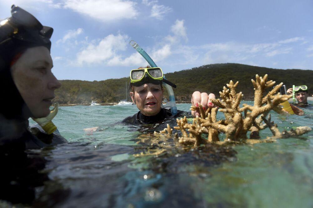 """Zjawisko """"wybielania się"""" koralowców zbadali naukowcy z australijskiego Uniwersytetu Jamesa Cooka."""