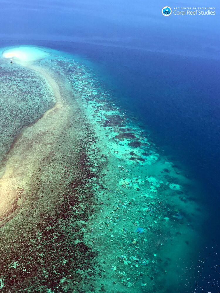 """Prawdopodobnie koralowce odrzucają wodorosty zapewniające im pokarm w przypadku sytuacji """"stresowej""""."""