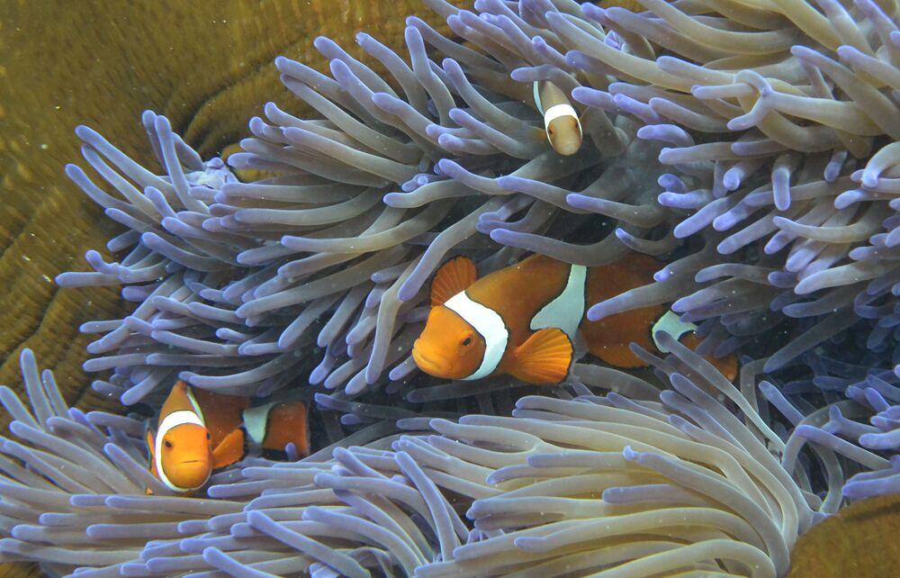 Odbarwione kolonie koralowców nie rosną i łatwiej ulegają zniszczeniu pod wpływem fal.