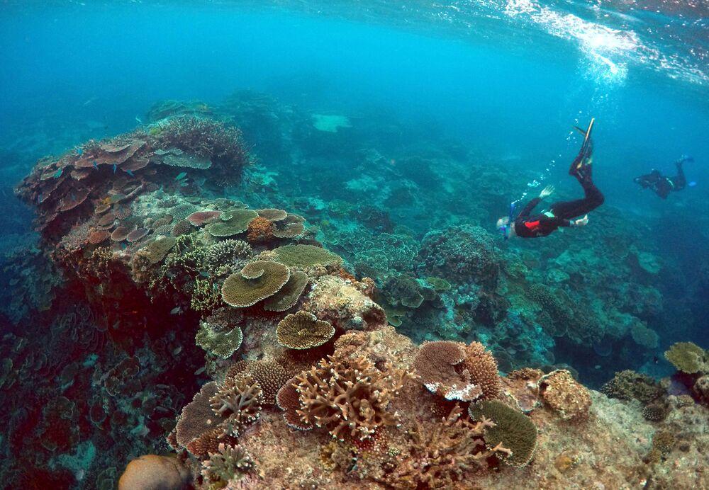 Peter Gash, właściciel i zarządzający Lady Elliot Island Eco Resort podczas oględzin Wielkiej Rafy Koralowej.