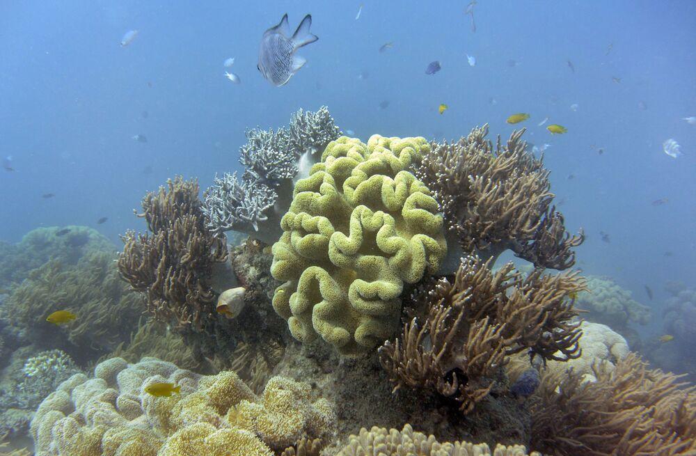 Białe koralowce Wielkiej Rafy Koralowej cierpią z powodu globalnego ocieplenia.
