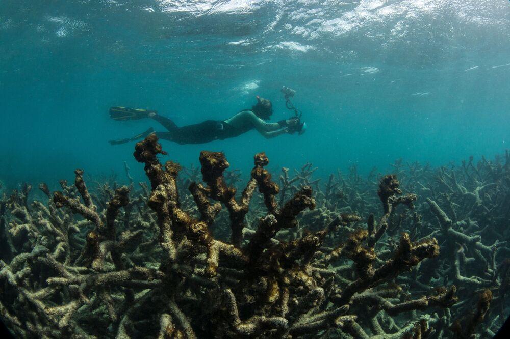 Według najnowszych danych temperatura wody w oceanie światowym zrównała się ze wskaźnikami charakterystycznymi dla ostatniego okresu międzylodowcowego, najcieplejszego odcinka na przestrzeni ostatnich 800 tys. lat.