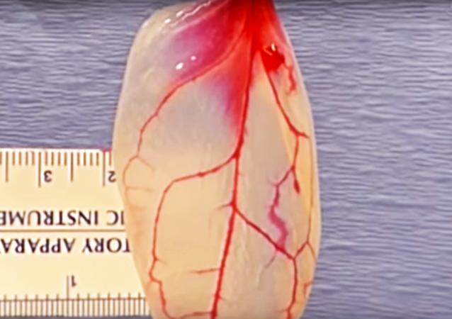 Organiczna substancja z liści szpinaku podobna do mięśnia sercowego