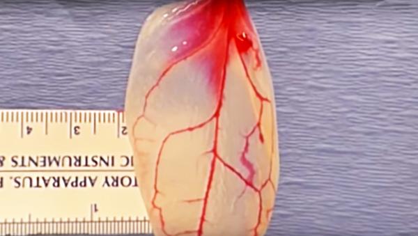 Organiczna substancja z liści szpinaku podobna do mięśnia sercowego - Sputnik Polska