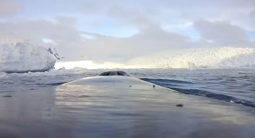 Naukowcy pokazali Antarktykę oczami wielorybów