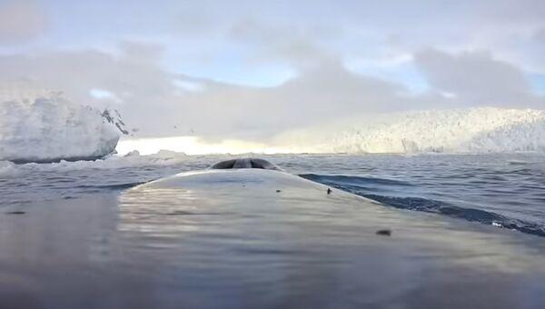 Naukowcy pokazali Antarktykę oczami wielorybów - Sputnik Polska