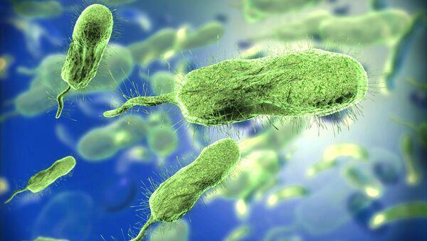 Bakterie - Sputnik Polska