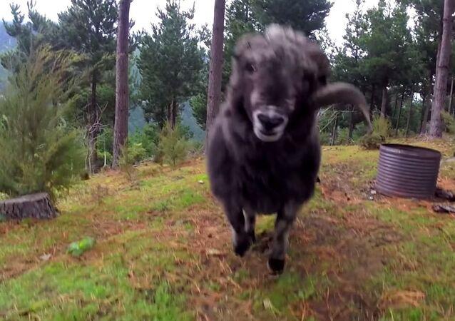 Owca - Najlepszy system ochronny!