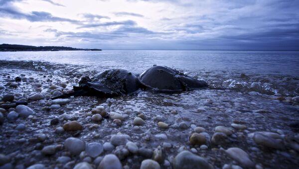 Plaża w Oyster Bay w stanie Nowy Jork - Sputnik Polska