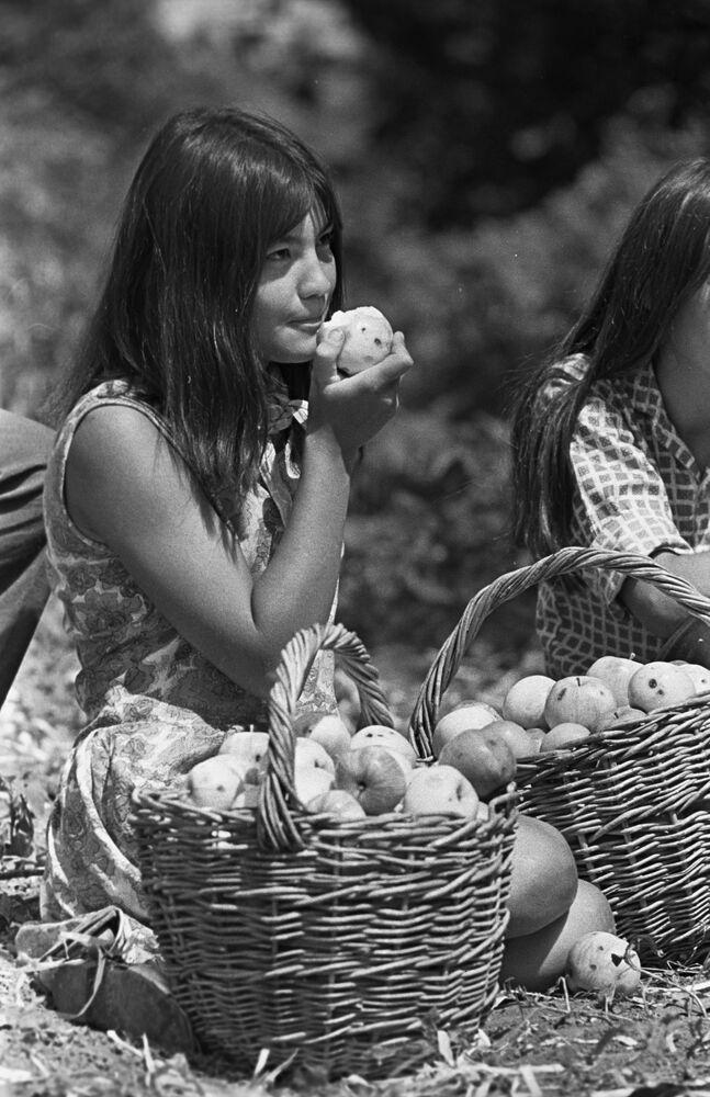 Studentka Baszkirskiego Instytutu Pedagogicznego przy zbiorze jabłek
