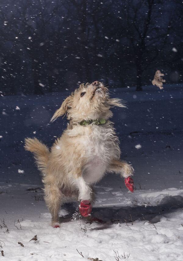 Zwycięzcą konkursu w kategorii Kocham psy, bo.. został fotograf z USA Julian Gottfried, autor zdjęcia Skacząc z radości. - Sputnik Polska
