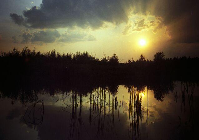 Zachód w rezerwacie Puszcza Białowieska