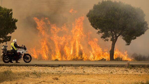 Policjant obserwuje rozprzestrzenienie się pożaru lasu na południu Hiszpanii - Sputnik Polska