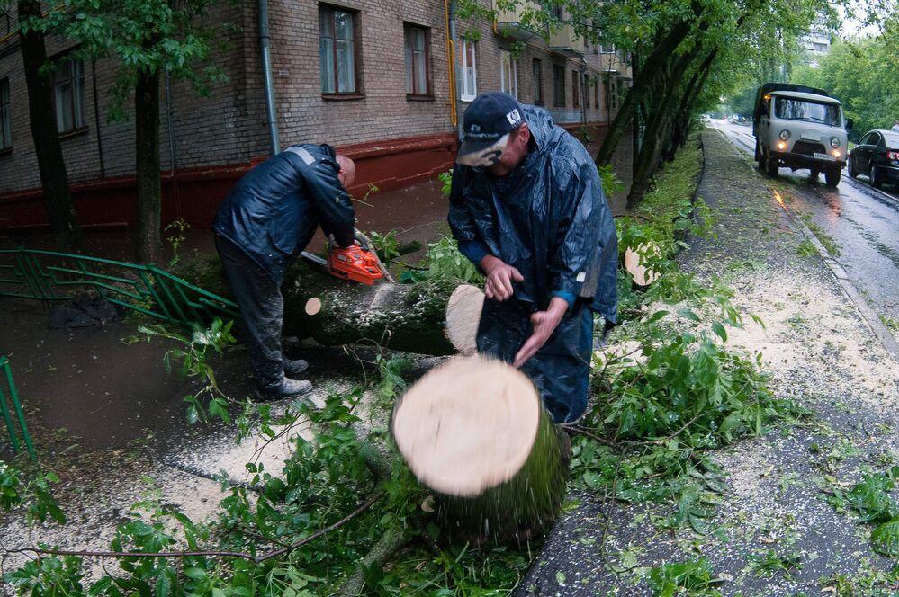 Pracownicy służb komunalnych usuwają zwalone drzewo po ulewie w Moskwie