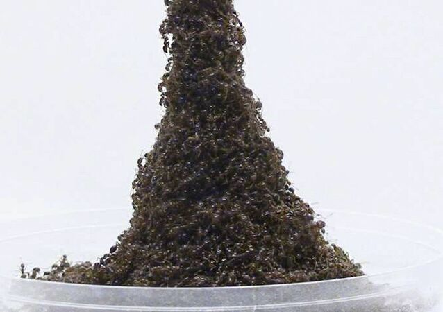Wieża Eiffla z mrówek