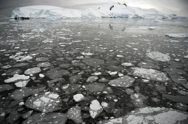 Pływający lód na powierzchni morza na Półwyspie Antarktycznym - Sputnik Polska