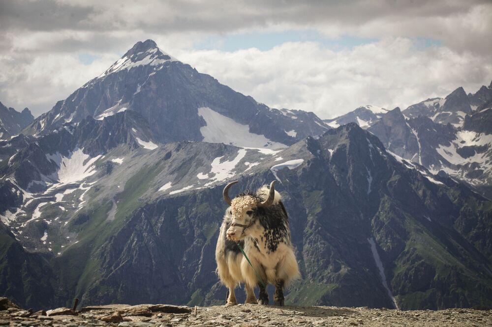 """Dombaj jest też nazywany """"sercem gór"""". Dombajska dolina jest położona na wysokości 1600 m n.p.m., a okalające ją góry osiągają wysokość 3000-4000 m."""