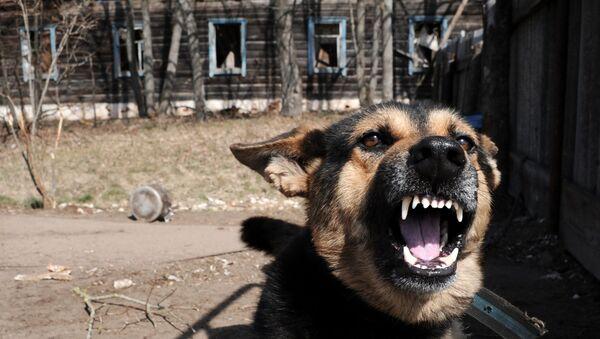 Chiny zaczęły klonować psy supermutanty - Sputnik Polska