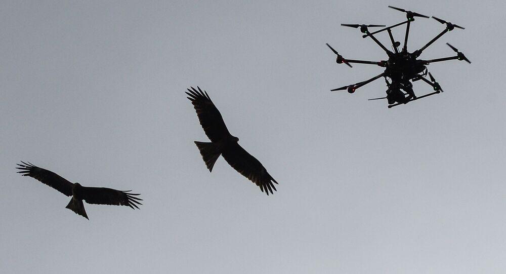 Ptaki i quadrocopter