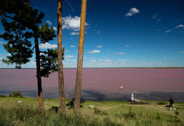 Gorzko-słone Malinowe jezioro w Kraju Ałtajskim - Sputnik Polska