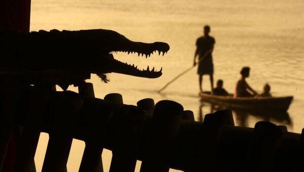 Mężczyźni łowią ryby w pobliżu krokodyla w Barra de Santiago, Salwador - Sputnik Polska