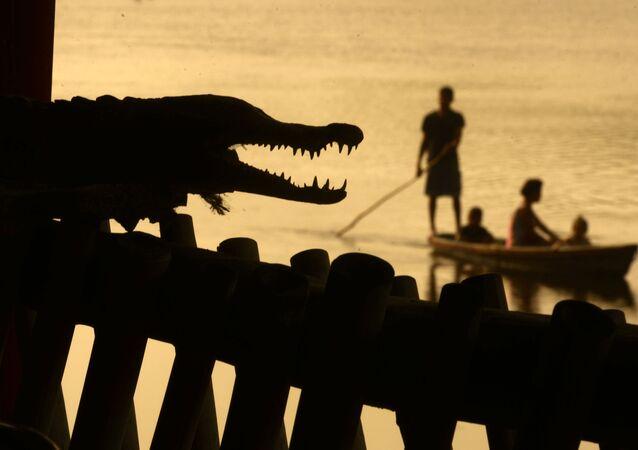 Mężczyźni łowią ryby w pobliżu krokodyla w Barra de Santiago, Salwador.