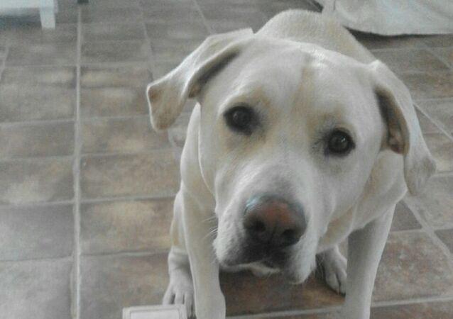 Blat, pies, który rozpoznaje nowotwór płuc