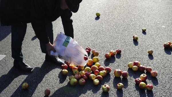 Рассыпанные яблоки - Sputnik Polska