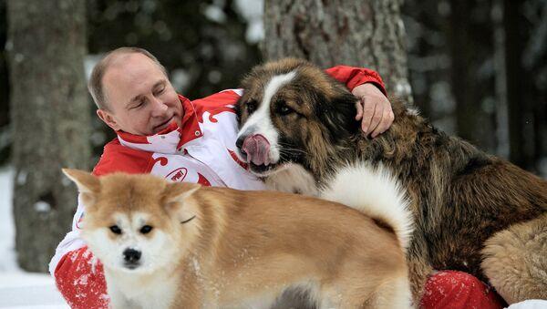 Spacer Władimira Putina z psami w obwodzie moskiewskim. - Sputnik Polska