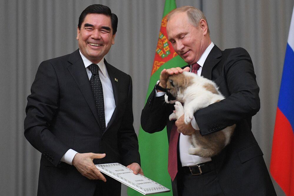Prezydent Turkmenistanu Gurbanguly Berdimuhamedow podarował Władimirowi Putinowi szczeniaka ałabaja (owczarka środkowoazjatyckiego)