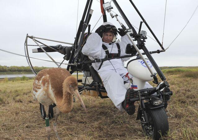 Władimir Putin wziął udział w ekologicznym projekcie Lot nadziei