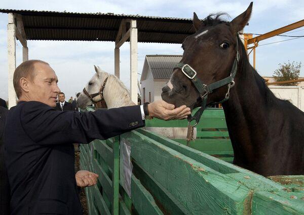 Władimir Putin w obwodzie saratowskim - Sputnik Polska