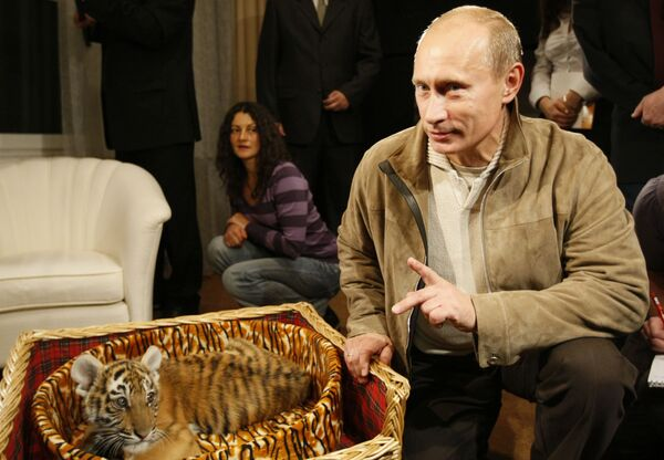 Władimir Putin pokazał dziennikarzom tygrysa, którego podarowano prezydentowi na urodziny - Sputnik Polska