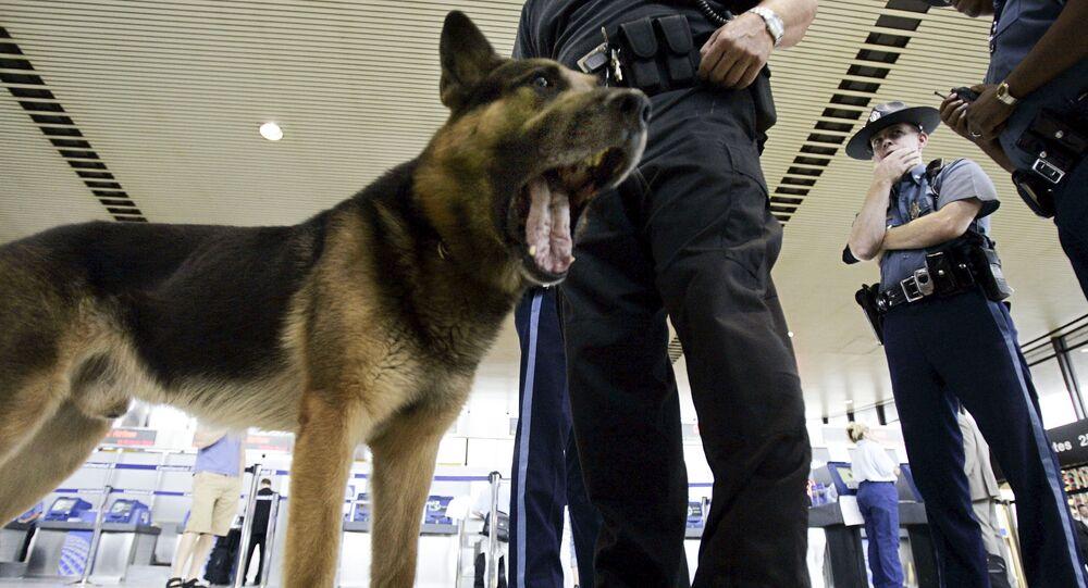 Pies na terminalu lotniska w Los Angeles, USA