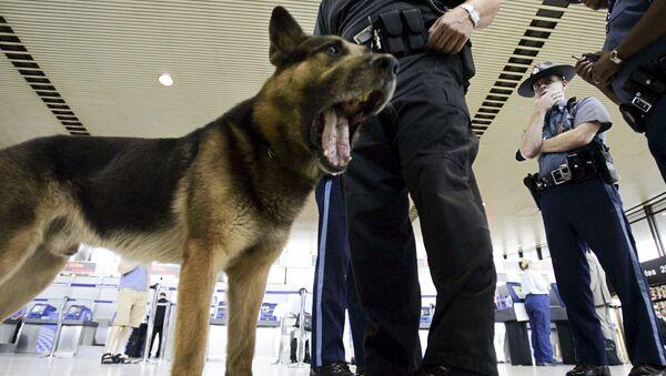 Pies na terminalu lotniska w Los Angeles, USA - Sputnik Polska