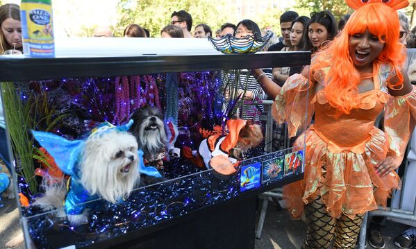 Psy w kostiumach na psiej paradzie Halloween - Sputnik Polska